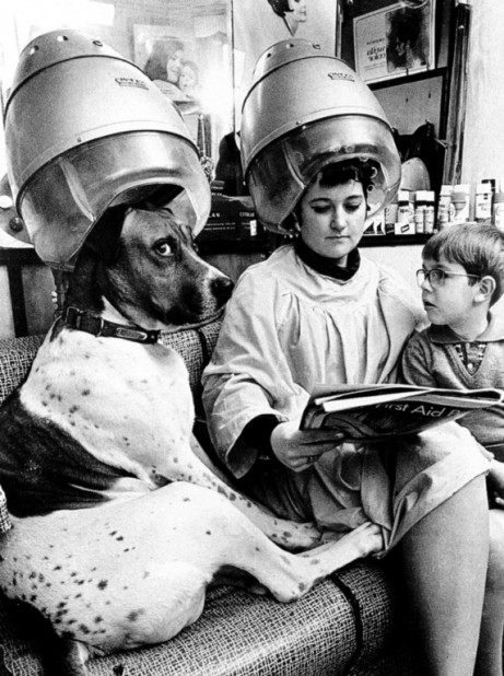 DOG-IN-BEAUTY-SALON-HAIR-DRYER-1960-PHOTO-POSTCARD