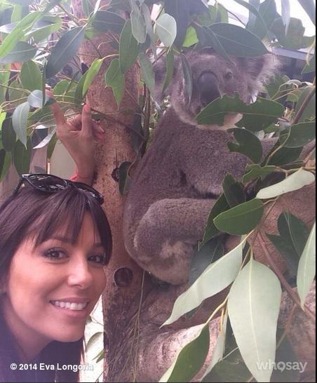 eva-longoria-koala
