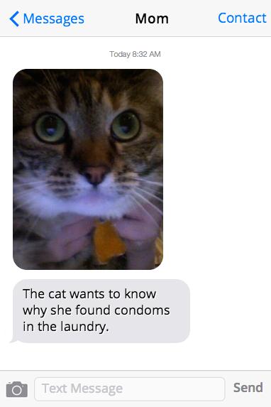 cat-condom