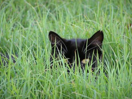 Social-Media-Hiding