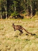 Then we took my first-ever detour to Wiseman's Ferry. There were kangaroos (or maybe wallabies?) everywhere and the countryside was gorgeous. Oh, and I stayed very zen about how late we were running to return to Sydney and collect the kids.
