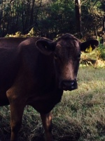 There were also heaps of cows standing on the side of the road languidly staring at us.