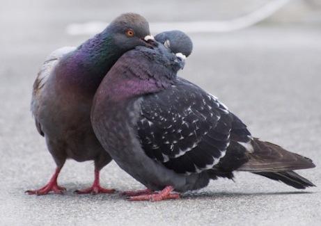 PigeonPair
