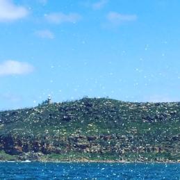 Sea spray as we motored past Barrenjoey Lighthouse.