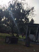 Cemetery shot