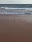 Hello seagull.