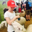 Feeding a pushy sheep.