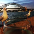 OK, it might have been nice to have someone to share a glass of wine with before the show ... instead of a couple of seagulls.