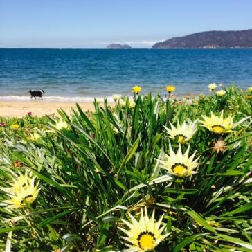 Gorgeous Patonga Beach.