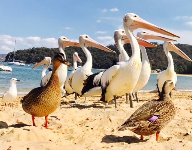 DD's fab pelican snap.