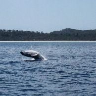 Baby whale at play.