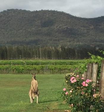 Another kangaroo.