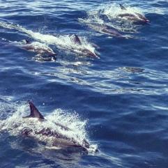 Dolpins at Wineglass Bay!