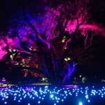 Gorgeous tree lights in the Botanic Gardens