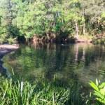 Currumbin waterhole