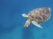 DD had an awesome encounter with a turtle underwater and got this fab shot