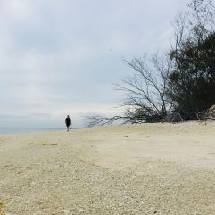 DD wandering along the beach