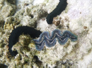 Amazing clam and sea cucumbers